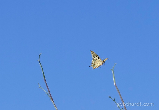 Blue sky and a butterfly